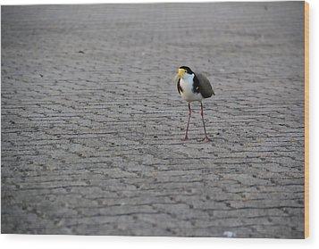 Lonely Bird Wood Print