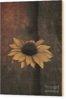 Wood Print featuring the photograph Lonely Coneflower by Marjorie Imbeau