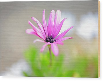 Lonely Cosmos Wood Print