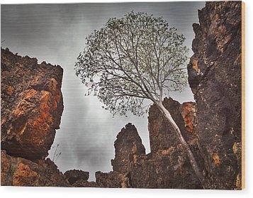 Lonely Gum Tree Wood Print by Dirk Ercken