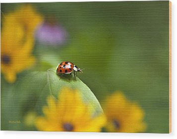 Lonely Ladybug Wood Print by Christina Rollo
