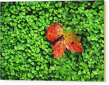 Wood Print featuring the photograph Lonely Leaf by Charlie and Norma Brock