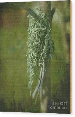 Lonely Lichen Wood Print by Judi Bagwell