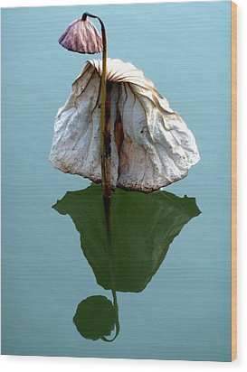 Wood Print featuring the photograph Lonely Lotus by Julia Ivanovna Willhite
