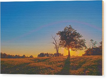 Wood Print featuring the photograph Lonely Tree On Farmland At Sunset by Alex Grichenko