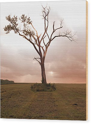 Wood Print featuring the photograph Lonely Tree by Ricky L Jones
