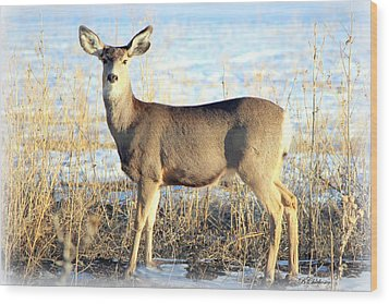 Wood Print featuring the photograph Lonesome Doe Sunset by Barbara Chichester