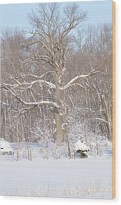 Wood Print featuring the photograph Loney Ash by Dacia Doroff