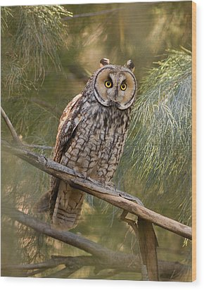 Long-eared Owl Wood Print by Doug Herr