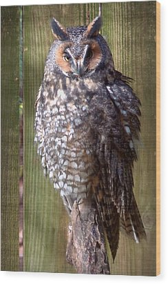 Wood Print featuring the photograph Long Eared Owl by Joseph Skompski