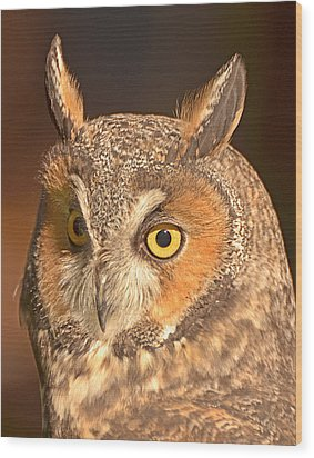 Long-eared Owl Wood Print by Nancy Landry