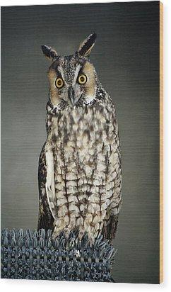 Long-eared Owl Wood Print by Paulette Thomas