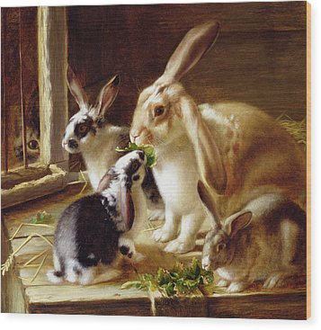 Long-eared Rabbits In A Cage Watched By A Cat Wood Print