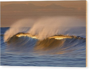 Long Golden Crest  Mg_1721 Wood Print by David Orias
