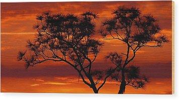 Long Leaf Pine Wood Print