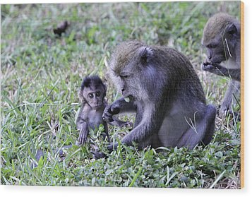 Wood Print featuring the photograph Long Tailed Macaque Family by Shoal Hollingsworth