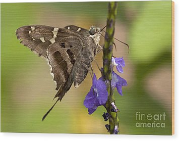 Wood Print featuring the photograph Long-tailed Skipper Photo by Meg Rousher