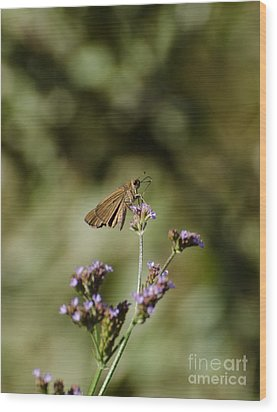 Long-winged Skipper Butterfly Wood Print
