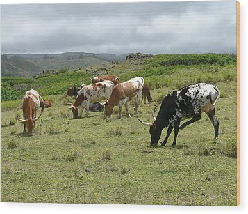 Longhorn Cattle Wood Print