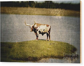 Longhorn Wood Print by Scott Pellegrin