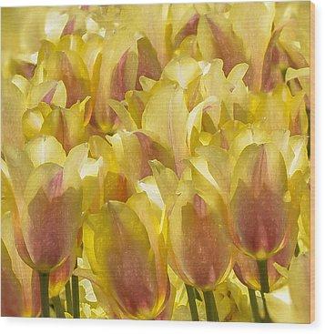 Longwood Gardens Tulips Wood Print by Jill Balsam