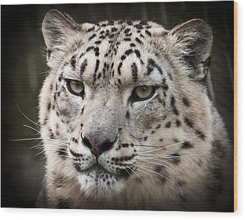 Look Into My Leopard Eyes Wood Print