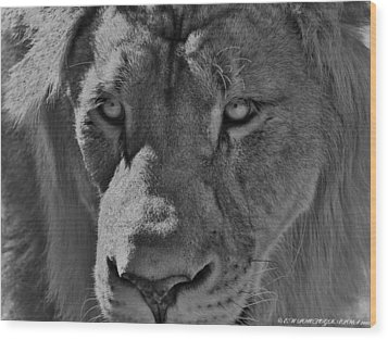 Wood Print featuring the photograph Look Of Concern by Elaine Malott