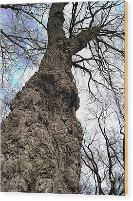 Wood Print featuring the photograph Look Up Look Way Up by Nina Silver