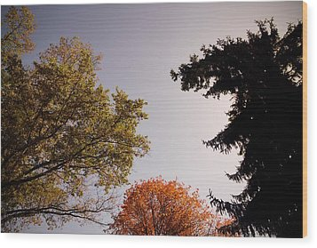 Wood Print featuring the photograph Looking Down On Us by Photographic Arts And Design Studio