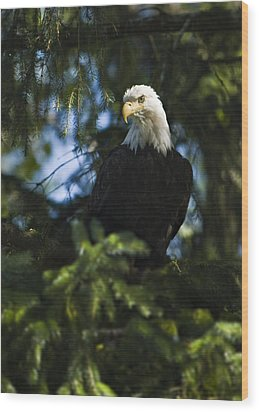 Looking For Lunch Wood Print