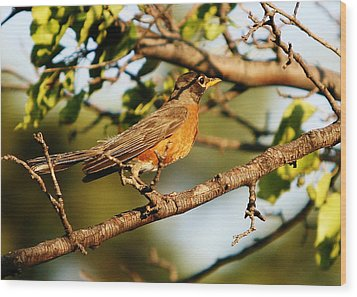 Wood Print featuring the photograph Looking For Spring by Shirley Heier