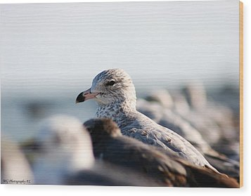 Looking Seagull Wood Print