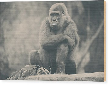 Looking So Sad Wood Print by Laurie Search
