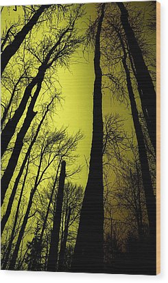 Looking Through The Naked Trees  Wood Print by Jeff Swan