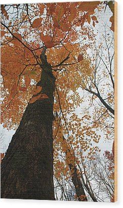 Wood Print featuring the photograph Looking Up by Alicia Knust