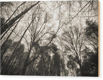 Looking Up At Trees Wood Print by J Riley Johnson