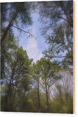 Wood Print featuring the photograph Looking Up by Jim Whalen