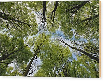 Wood Print featuring the digital art Looking Up by Ron Harpham