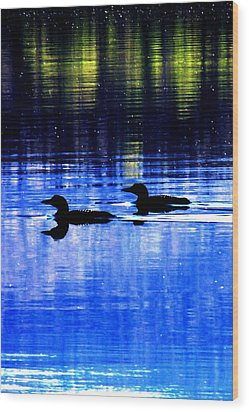 Loons In Pittsburg Wood Print by Will Boutin Photos