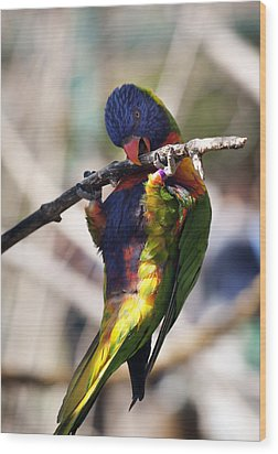Lorikeet Bird Wood Print by Marilyn Hunt