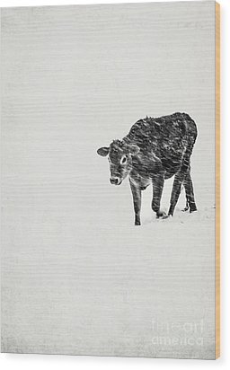 Lost Calf Struggling In A Snow Storm Wood Print by Edward Fielding