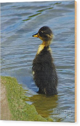 Lost Duckling Wood Print by Olivia Hardwicke