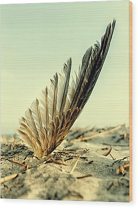Lost Feather At The Beach Wood Print