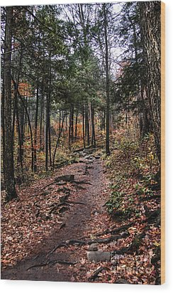 Wood Print featuring the photograph Lost In Thought On The Blue Ridge Parkway Trail by Debbie Green