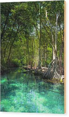 Lost Lagoon On The Yucatan Coast Wood Print by Mark E Tisdale