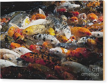 Wood Print featuring the photograph Lots Of Hungry Koi  by Wilma  Birdwell