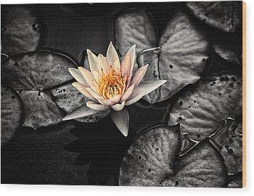 Lotus 2 Wood Print