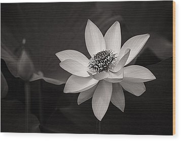 Lotus Black And White Art Series Wood Print