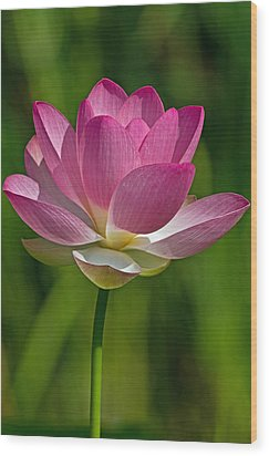 Wood Print featuring the photograph Lotus Bloom by Jerry Gammon