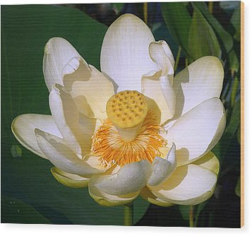 Wood Print featuring the photograph Lotus Blossom # 1 by Jim Whalen